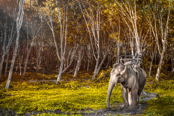 Elephant in Thailand - Stock Photo - Images