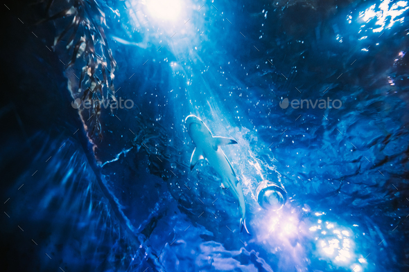 Shark Swimming In Aquarium. Bottom View Of Fish In Motion - Stock Photo - Images