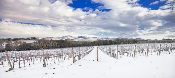 Vineyards rows covered by snow in winter. Chianti, Florence, Ita - Stock Photo - Images