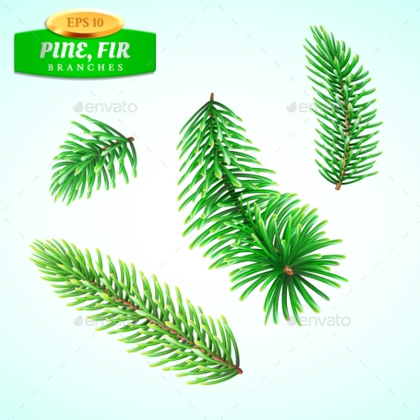 Set of Fir Branches Christmas Tree - Organic Objects Objects