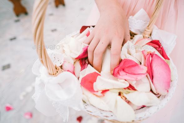 Hands grab rose petals - Stock Photo - Images