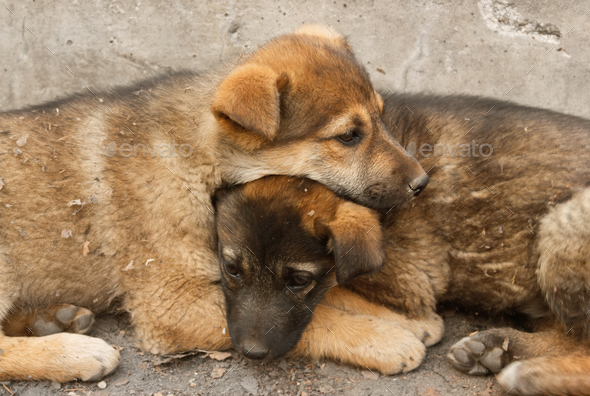 Homeless puppies lie on each other to keep warm on the ground - Stock Photo - Images
