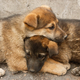 Homeless puppies lie on each other to keep warm on the ground - PhotoDune Item for Sale