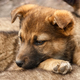 Street puppy face close up - PhotoDune Item for Sale