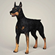 Realistic Doberman Dog