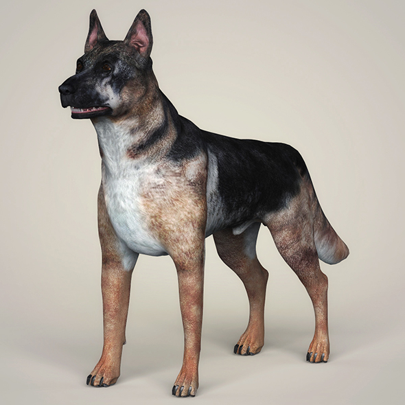 3DOcean Realistic German Shepherd Dog 21097666