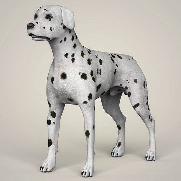 3DOcean Realistic Dalmation Dog 21097678