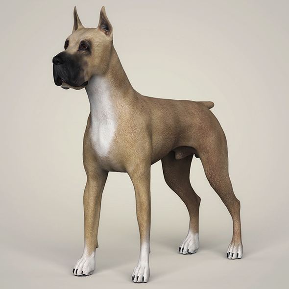 3DOcean Realistic Great Dane Dog 21097725
