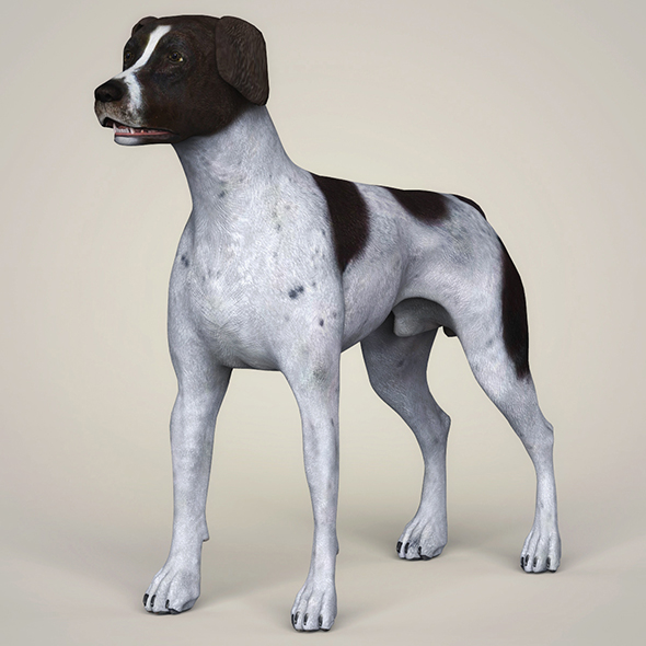 3DOcean Realistic German Shorthaired Dog 21097730