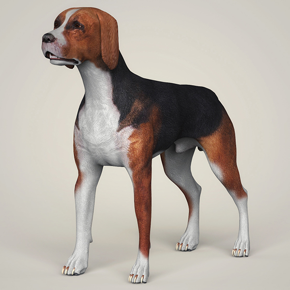 Realistic Hound Black Dog - 3DOcean Item for Sale