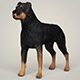 Realistic Rottweiler Dog - 3DOcean Item for Sale