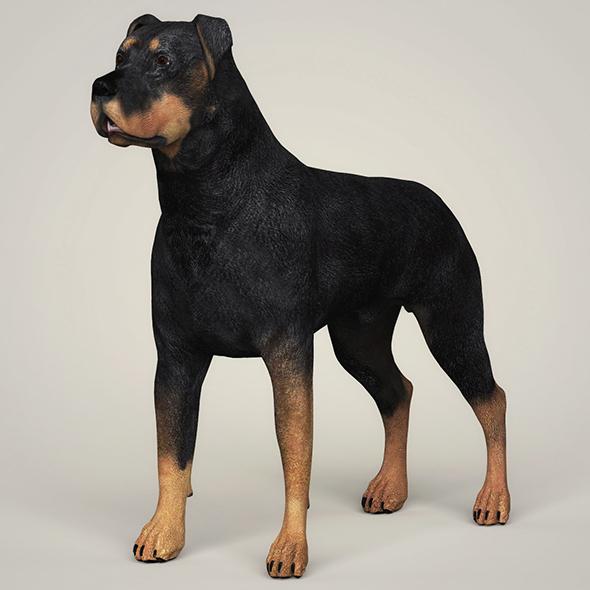 Realistic Rottweiler Dog - 3DOcean Item for Sale
