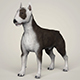 Realistic Bull Terrier Dog