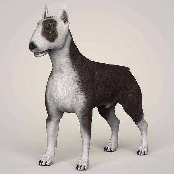 3DOcean Realistic Bull Terrier Dog 21097811