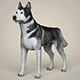 Realistic Alaskan Malamute Dog - 3DOcean Item for Sale