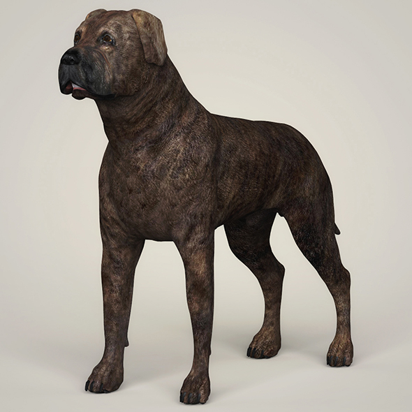 3DOcean Realistic Mastiff Dog 21097832