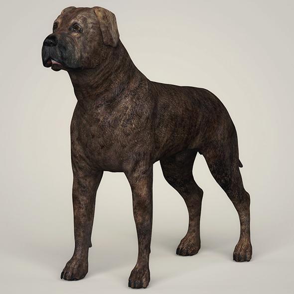 Realistic Mastiff Dog - 3DOcean Item for Sale