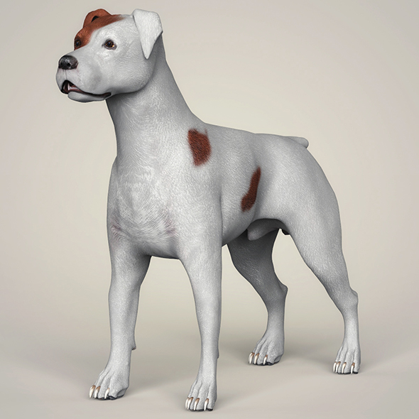 Realistic Parson Russell Terrier Dog - 3DOcean Item for Sale