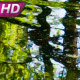 Surface Of Forest Pond - VideoHive Item for Sale