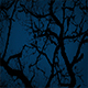 Ancient Gnarled Tree Branches On Stormy Night - VideoHive Item for Sale