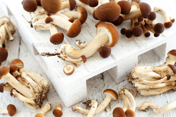 Agrocybe aegerita mushrooms (Pioppino) - Stock Photo - Images
