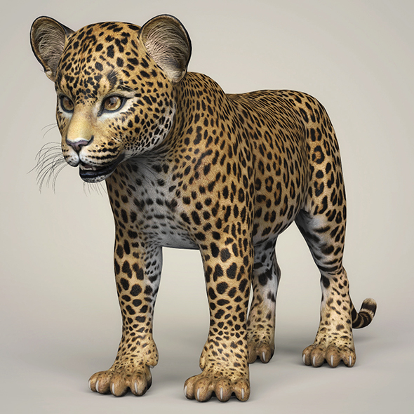 Photorealistic Leopard Cub - 3DOcean Item for Sale