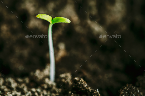 Growing Green Sprout From Soil. Spring Concept Of New Life. Agri - Stock Photo - Images