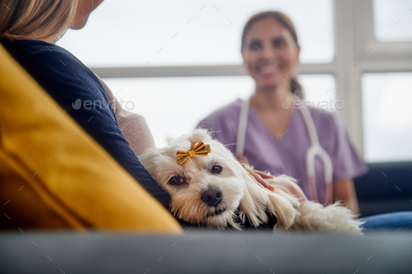 Veterinary House Call With Doctor Dog Owner And Pet - Stock Photo - Images