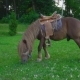 Brown Horse Pony with a Big Mane - VideoHive Item for Sale