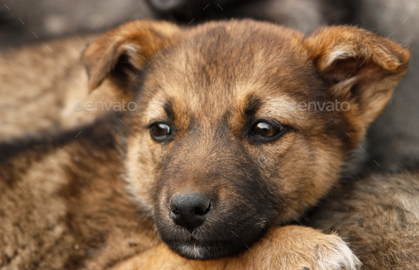 Homeless, sad puppy muzzle close up - Stock Photo - Images