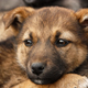 Homeless, sad puppy muzzle close up - PhotoDune Item for Sale