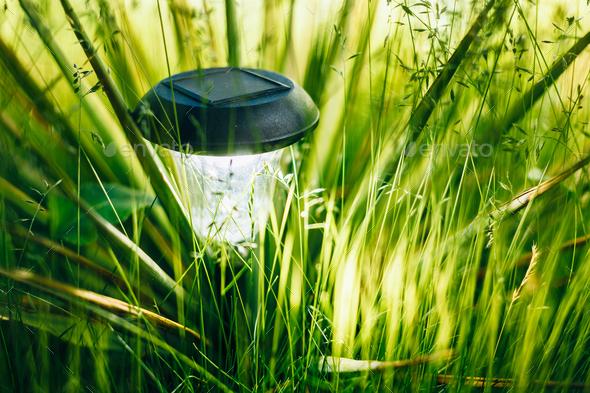 Small Solar Garden Light, Lanterns In Flower Bed. Garden Design. - Stock Photo - Images