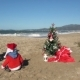 Christmas at the Beach - VideoHive Item for Sale