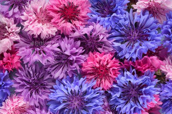 Organic background of cornflowers - Stock Photo - Images