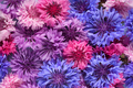 Organic background of cornflowers - PhotoDune Item for Sale