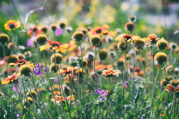 Vintage photography of flowers in garden - Stock Photo - Images