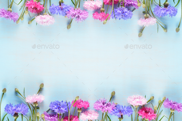 Cornflowers on blue background with copy-space - Stock Photo - Images