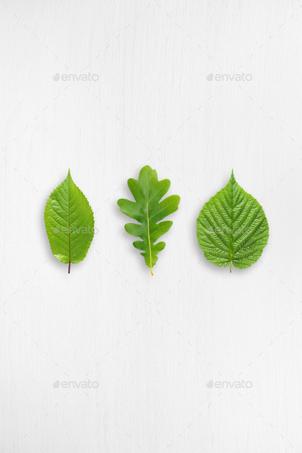 Green leaves on white wooden table with copy-space - Stock Photo - Images