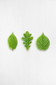 Green leaves on white wooden table with copy-space - PhotoDune Item for Sale