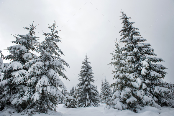 Winter landscape with snow covered trees - Stock Photo - Images