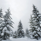 Winter landscape with snow covered trees - PhotoDune Item for Sale