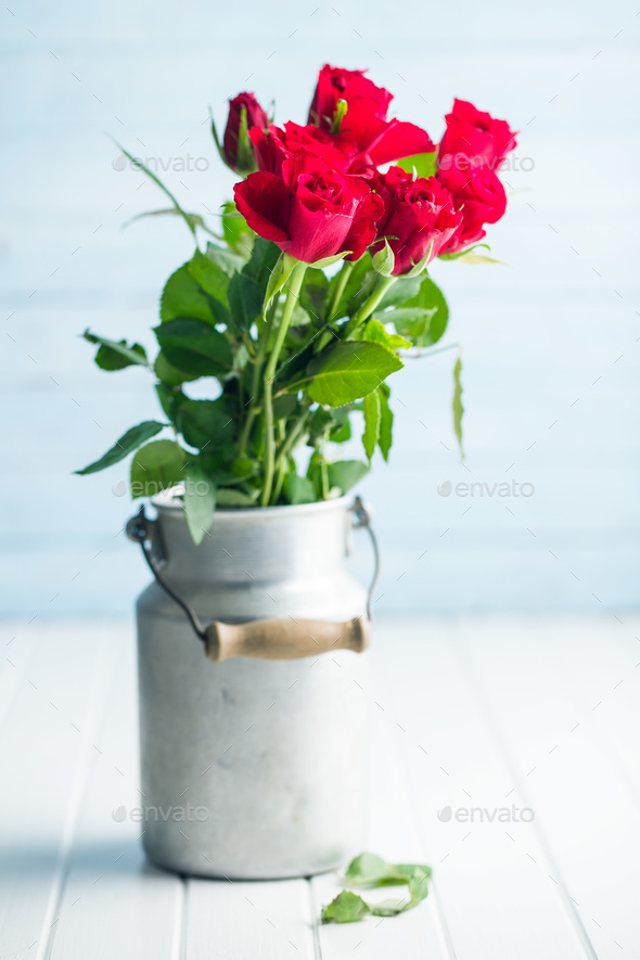 Red rose flower. - Stock Photo - Images