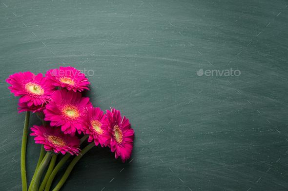 Pink gerbera flower. - Stock Photo - Images