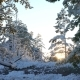 Forest in Snow in Finland - VideoHive Item for Sale