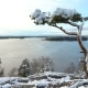 Lonely Pine Covered Snow on a Rock Over the Baltic Sea - VideoHive Item for Sale