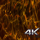 Epic Gold Abstract Background 4k - VideoHive Item for Sale
