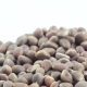 Pine Nuts in Bulks - VideoHive Item for Sale