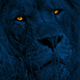 Lion Turns Around With Glowing Eyes At Night - VideoHive Item for Sale