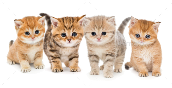 Portrait of four  kittens - Stock Photo - Images