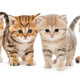 Portrait of four  kittens - PhotoDune Item for Sale